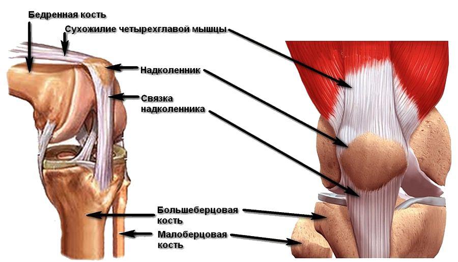 Лечение воспаление сухожилий коленного сустава рецепты для суставов ног